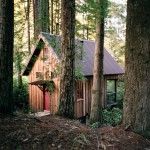 owl tree cabin A